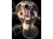 Picture 3D Cobra