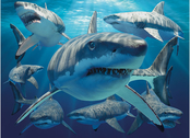 Picture 3D Great white sharks