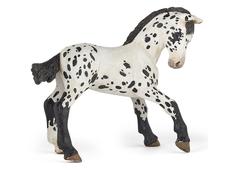 Appaloosa Foal black