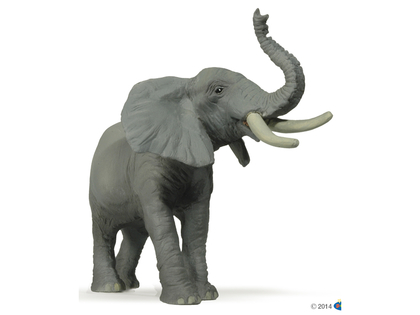 Elephant African trumpeting