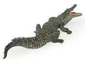 Crocodile green