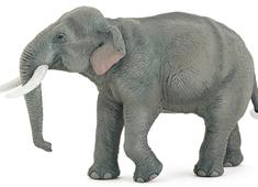 Elefant Indisk
