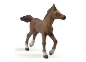 Anglo-Arab Foal light brown