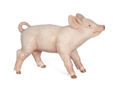 Piglet female