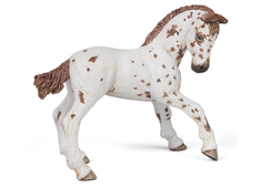 Appaloosa Foal brown
