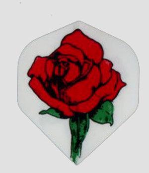 England Rose White