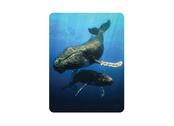 Magnet 3D Blue whale