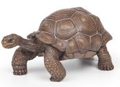 Sköldpadda Galapagos
