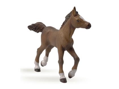 Anglo-Arab Foal (light brown)