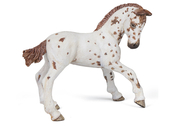 Appaloosa Foal (brown)