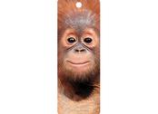 Bookmark 3D Baby orangutan