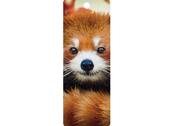 Bookmark 3D Baby red panda