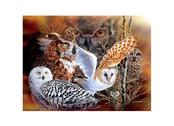 Card 3D Owl Woods