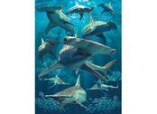 Picture 3D Hammerhead sharks