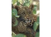 Kort 3D Leopardunge i träd