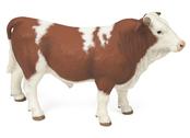 Bull Simmental