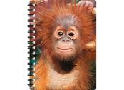 Notebook 3D Baby orangutan large