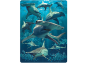 Card 3D Hammerhead sharks