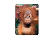 Magnet 3D Baby orangutan