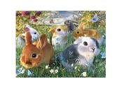 Kort 3D Kaniner