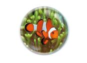 Magnet magnidome 'Clown fish'