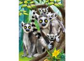 Bild 3D Lemurer