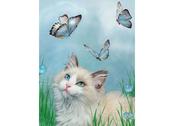 Kort 3D Katt & Blå Fjärilar