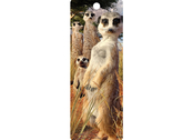 Bookmark 3D Meerkat Gaze