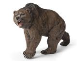 Grottbjörn