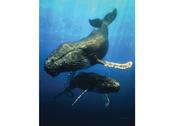 Card 3D Blue Whale