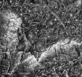 Totenburg - Weltmacht oder Niedergang [LP]