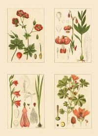 Strum Flora - Miniature Botanicals II