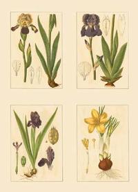 Strum Flora - Miniature Botanicals III