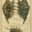 Diderot - Crackled Classic Shells III