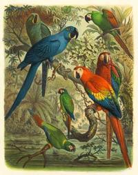 Cassel - Cassel Tropical Birds III