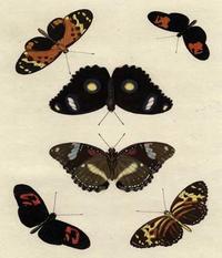 Unknown - Butterfly Melage I