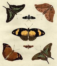 Unknown - Butterfly Melage IV