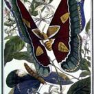 Pearson - Butterfly VI