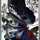 Pearson - Butterfly VIII