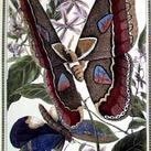 Pearson - Butterfly II