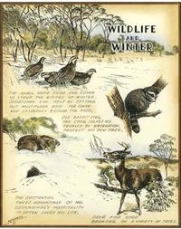 Robert Settle - Wildlife