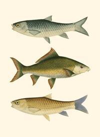Ernest Briggs - Antique Fish I