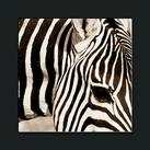 Frank & Susan Parker - Zebra Pattern