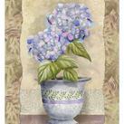 Abby White - Spring Hydrangea