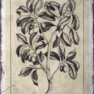Buchoz - Embellished Antique Foliage I