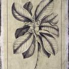 Buchoz - Embellished Antique Foliage II