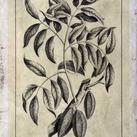 Buchoz - Embellished Antique Foliage III