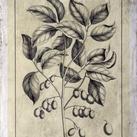 Buchoz - Embellished Antique Foliage V