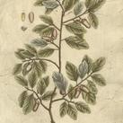 Blackwell - Vintage Foliage I