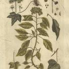 Blackwell - Vintage Foliage II
